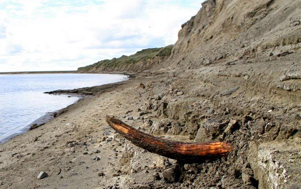 En mammutbete vid en flod på Tajmyrhalvön i Sibirien. Foto: Love Dalén
